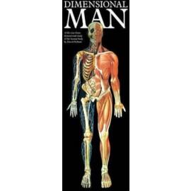 Dimensional Man Chart
