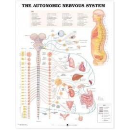 Autonomic Nervous System Chart