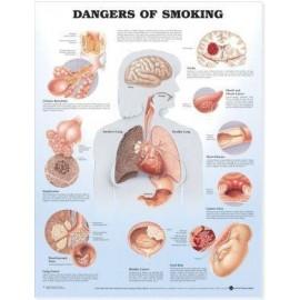 Dangers of Smoking Chart