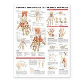 Anatomy and Injuries of the Hand and Wrist Chart