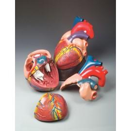 Budget Jumbo Heart Model