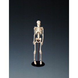 My First Skeleton Tiny Tim