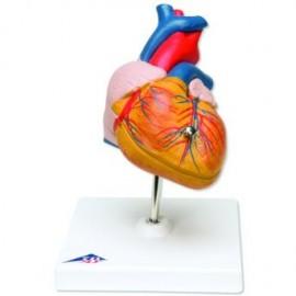 Classic Heart, 2 part