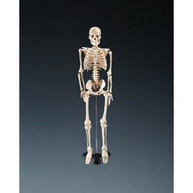 Mr. Thrifty Skeleton